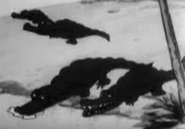 Mm-1932-08-20-crocodiles