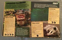 Predator VS Prey (1).jpeg