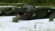 BBC.Prehistoric.Park.6of6.Supercroc.XviD.AC3.6ch.MVGForum.avi snapshot 20.50 -2017.02.18 20.31.35-