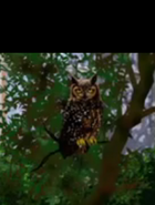 Aqua Teen Hunger Force Owl