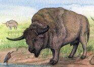 Long-horned bison