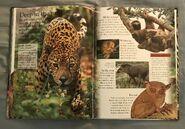 Mammals (Eye Wonder) (11)