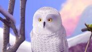 Owl, Snowy (Secret of the Wings)