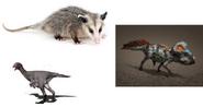 Protoceratops, Deltatheridium and Kol