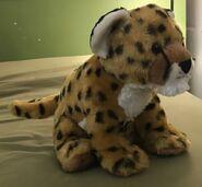 Quick the Cheetah Cub