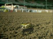SBSQ Bullfrog
