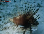 TASwSaJ Lionfish