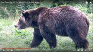 AKRNZ Grizzly
