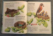 I Wonder How Parrots Can Talk (3)