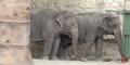 San Antonio Zoo Elephants