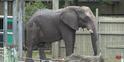 Tampa Lowry Park Zoo Elephant