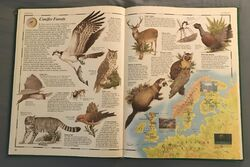 The Animal Atlas (11).jpeg