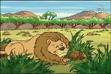Afican Lion