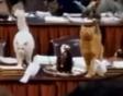 Evan Almighty Cats