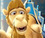 Felix the Camel