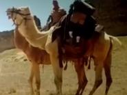 Jumanji Camels