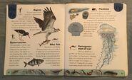 Ocean Life Dictionary (18)