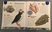 Ocean Life Dictionary (19)