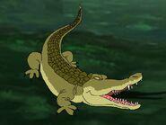 Rileys Adventures American Crocodile