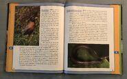Scholastic Encyclopedia Of Animals (43)