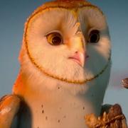 Soren the Owl