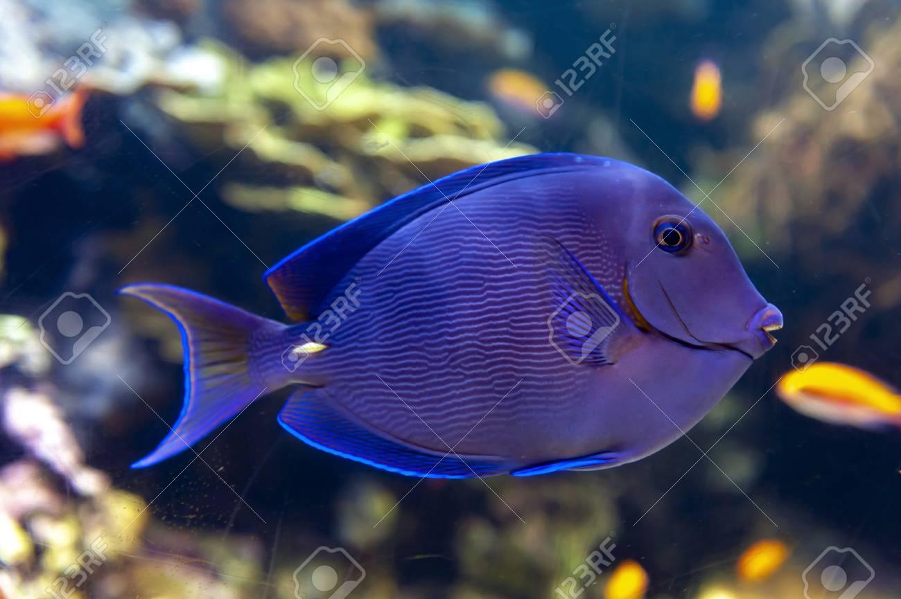 Aquarium Fishes Alphabet