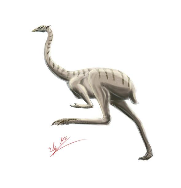 All Todays Ostrich