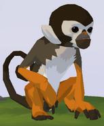 Squirrel Monkey WOZ