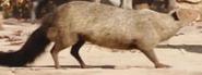 TJB Mongoose