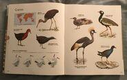 Visual Dictionary of Animals (74)