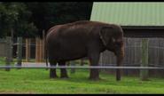 Wild Adventures Elephant