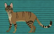 Wild Kratts African Wildcat