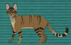 Wild Kratts African Wildcat.png