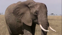 CITIRWN Elephant