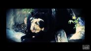 El Paso Zoo Andean Bear