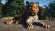 Planet Zoo Bengal Tiger