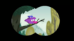 S1e22b Purple bird in tree