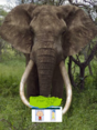 Stanley and joy meet an african elephant