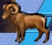 Bighorn sheep reader rabbit 1st grade