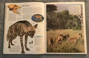 DK Encyclopedia Of Animals (95)