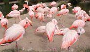 Flamingo san francisco zoo