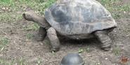 Forth Worth Zoo Tortoise