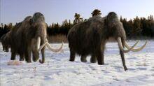 Mammoth, Wooly.jpg