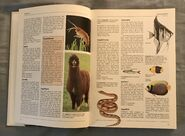 The Kingfisher Illustrated Encyclopedia of Animals (3)