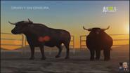 UTAUC Fighting Bulls