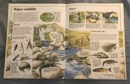 Usborne World Wildlife- Mountain Wildlife (6)