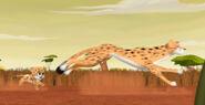 Dot Cheetah