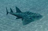 Endless ocean bowmouth