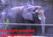LPZ Elephant