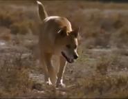 MATG Dingo